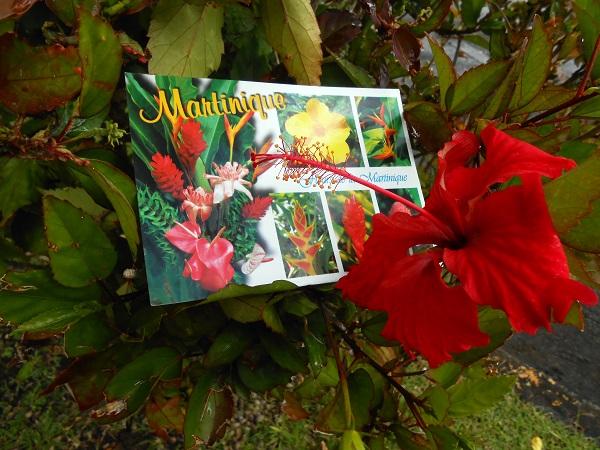Madinina, île aux fleurs, Flower Island