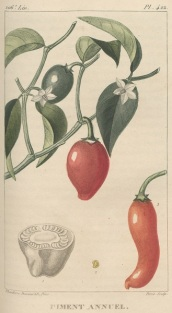 tanlistwa, piment rouge, descroutilz, 1828, gravure